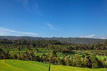 Panorama des wunderschönen terrassenförmig angelegten Reisfeldes in Bali Indonesien von Tjeerd Kruse