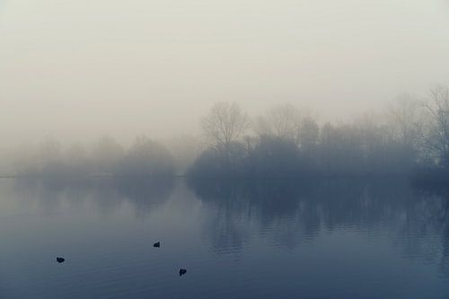 Misty morning van