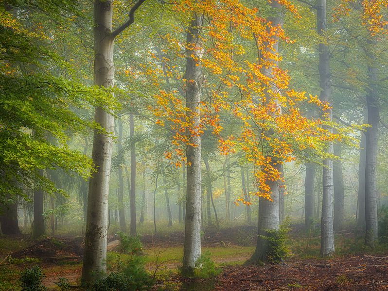 Het begin van de herfst van Arjen Noord