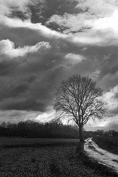 Einsamer Baum von RM Photographics
