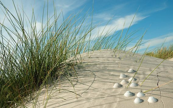 Noordzee shell