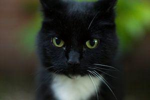 Kat in het bakkie of toch niet