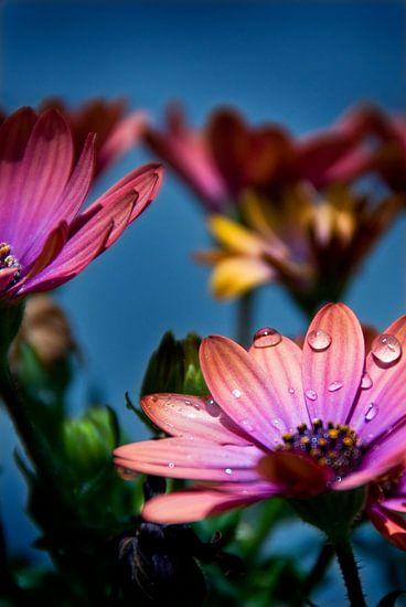 Roze bloemen van Mariska Hofman