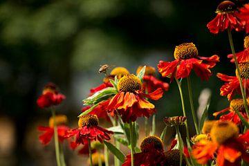 Bloemen en de bij (2) van Nathan Okkerse