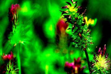 Flora : Natur genießen von Michael Nägele