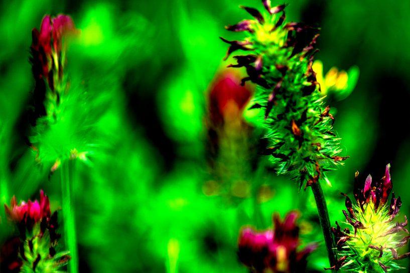 Flora : Geniet van de natuur van Michael Nägele