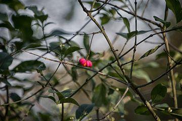 Eenzaam bloempje van Ralph Mbekie