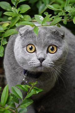 graue Katze oder Katze von Karin Maartense