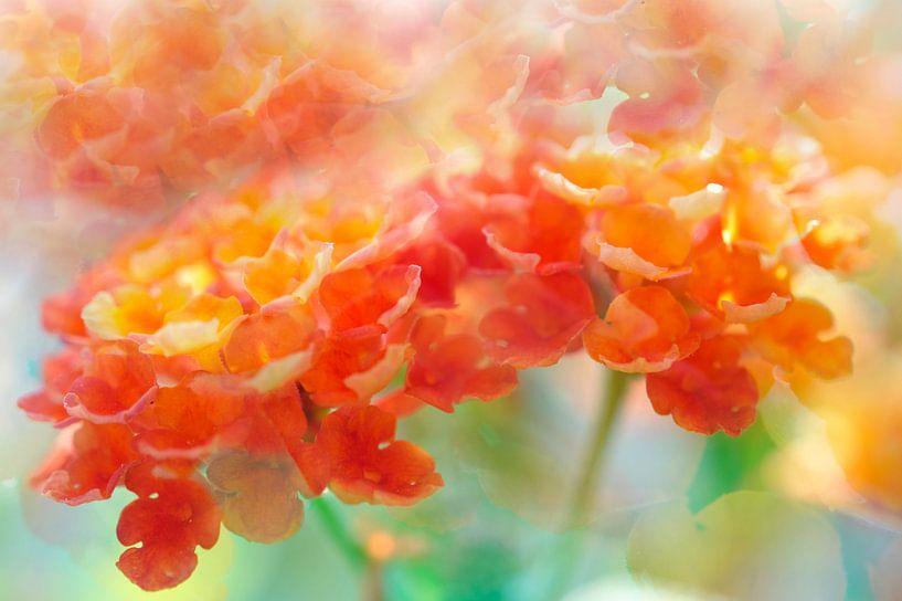 Rêve floral van Martine Affre Eisenlohr
