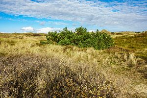 Landscape in the dunes of the North Sea island Amrum