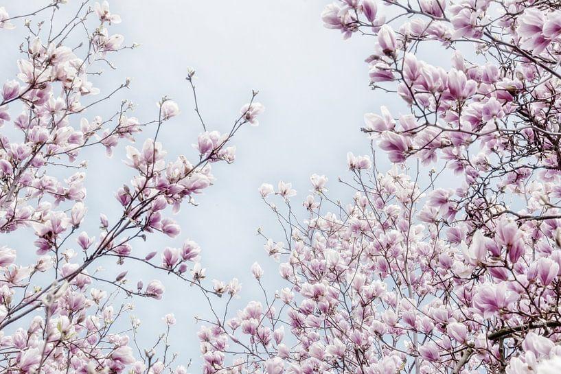 Magnoliabloesem lentebloesem II van Jessica Berendsen