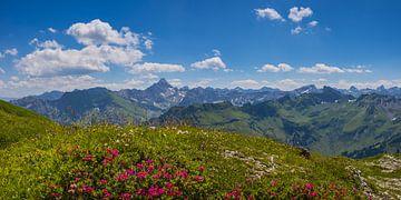 Alpenrosen und Hochvogel von Walter G. Allgöwer