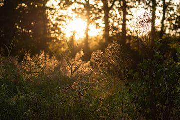 gouden licht door de bomen van Tania Perneel