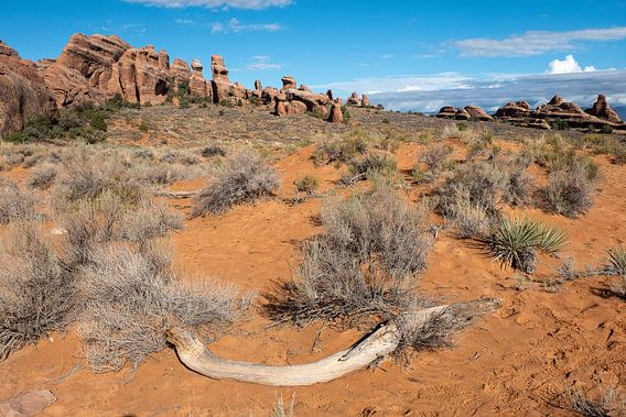 Moab woestijn