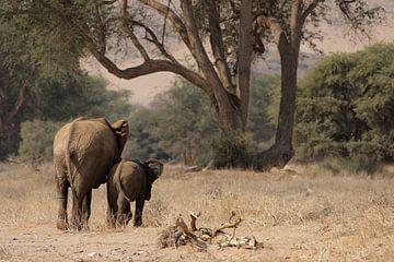 Wüstenelefanten in Namibia von Dirk Rüter