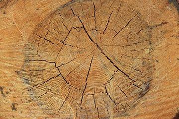 Binnenkant van omgezaagde boomstam van Bobsphotography