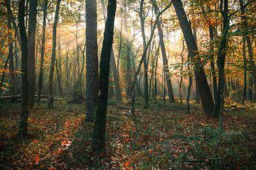 Les couleurs de la beauté sur Joris Pannemans - Loris Photography