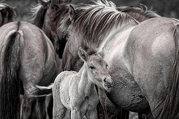 Wilde Paarden in zwart Wit van Robert Jan Smit