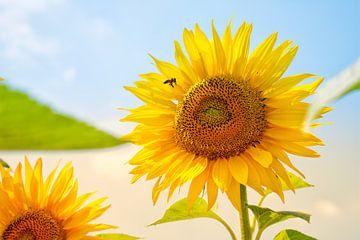 Prachtig mooie zonnebloem met vliegende bij von Modesty Mertens