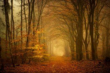 Der Schein des Waldes von Lars van de Goor