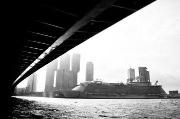 Rotterdam Oasis van Frank Hensen