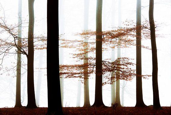 Forest Whispers van Lars van de Goor
