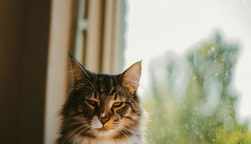 Unamused cat in front of window van Anita Kranendonk