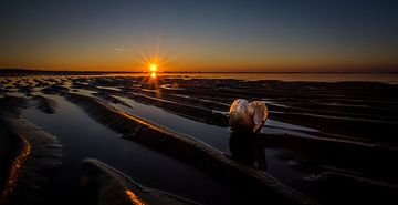 Schelp in zonsondergang van