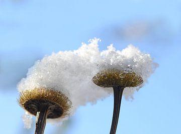 Sneeuwhoeden von Margo Biewinga
