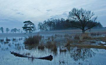 water van Anne Koop