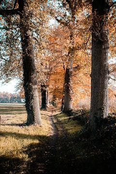 tree van Wim de Vos