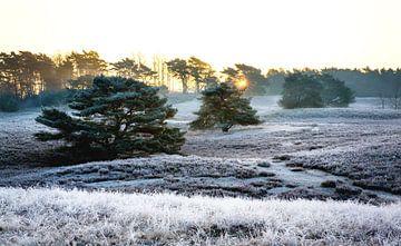Brunsummerheide tijdens de winter sur Yvette Baur