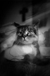 holy cat van anouk smit