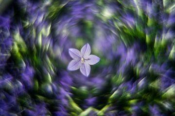 blaue Blume von Udo Wanninger limitiete Auflage