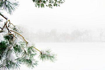 Dennentak in de sneeuw op landgoed in Nederland van Ron van der Stappen