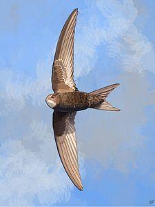 Gierzwaluw in Vogelvlucht van Volwater