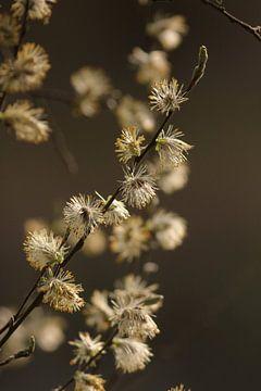 Voorjaarsgevoel sur Klaas de Vries