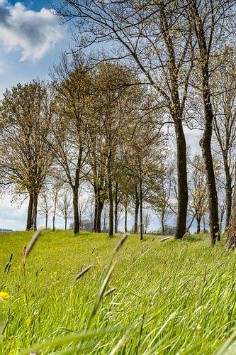 Wuivend gras langs de dijk