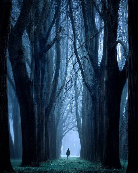 The Enchanted forest van Niels Tichelaar