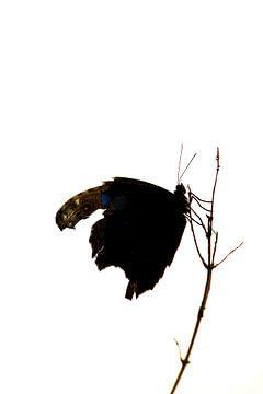 Vlinder van Saskia Hoks