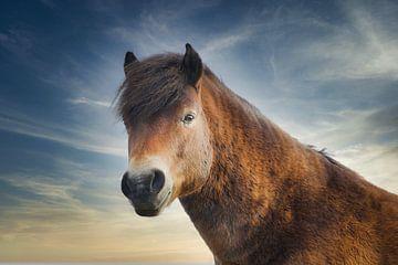 Prachtig Konikpaard van Wendy Tellier - Vastenhouw