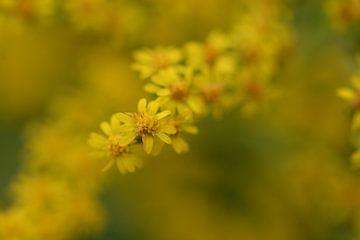 gele bloemen van Eveline De Brabandere