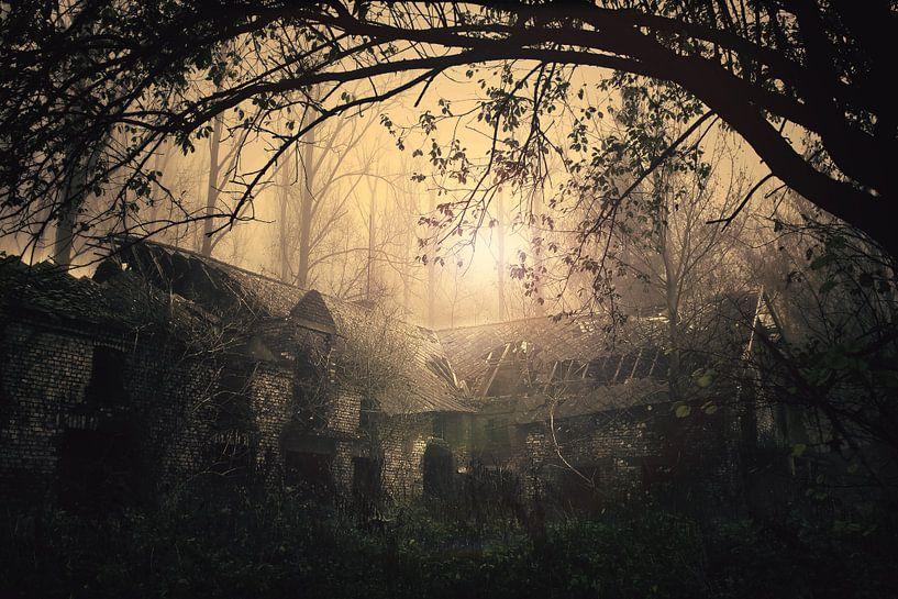 lost in the woods van DC19 -BE