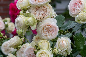 Rosen sind ein Fest für das Auge und Ihren Garten von JM de Jong-Jansen