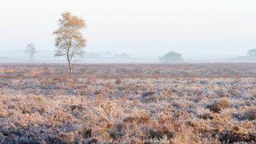 Berk in mist