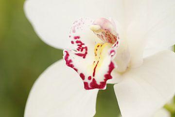 Orchidee van Frouwkje Fotografie