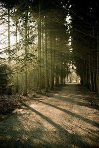 Het pad