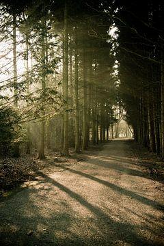 Het pad van M.e. Amrani
