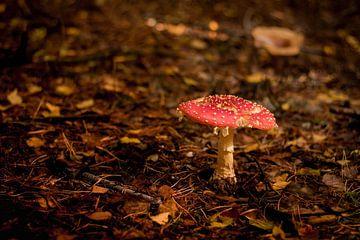 Paddenstoel rood met witte stippen van Marloes Hoekema