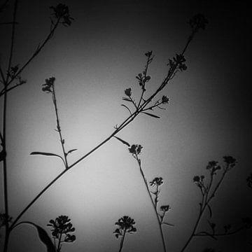 twiggy 03 von poetic snapshots